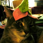 a cat wearing a pixie hat - she certainly doesn't look very happy