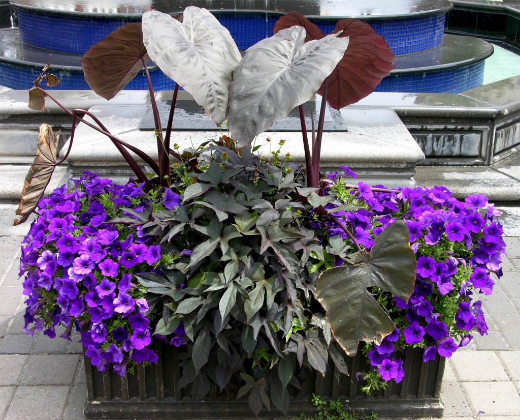 flowers_purple_planter